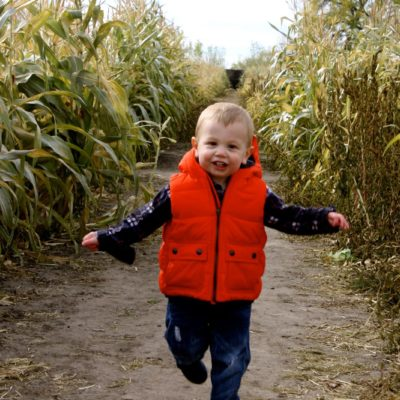 Pumpkin Patch Photos and Backgrounds