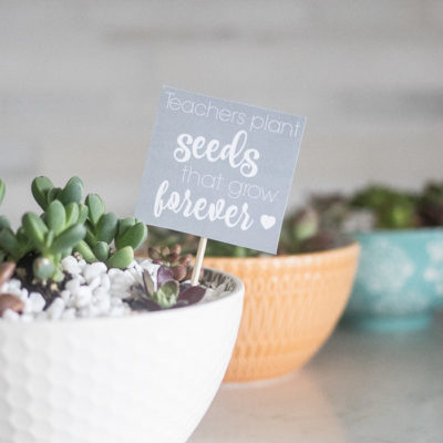 Succulent Bowl Teacher Gift