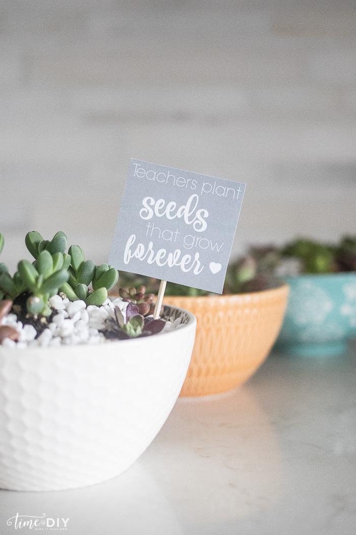 Succulent Bowl Teacher Gift